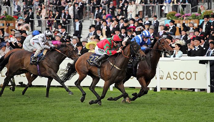 Pferdewette Rennen